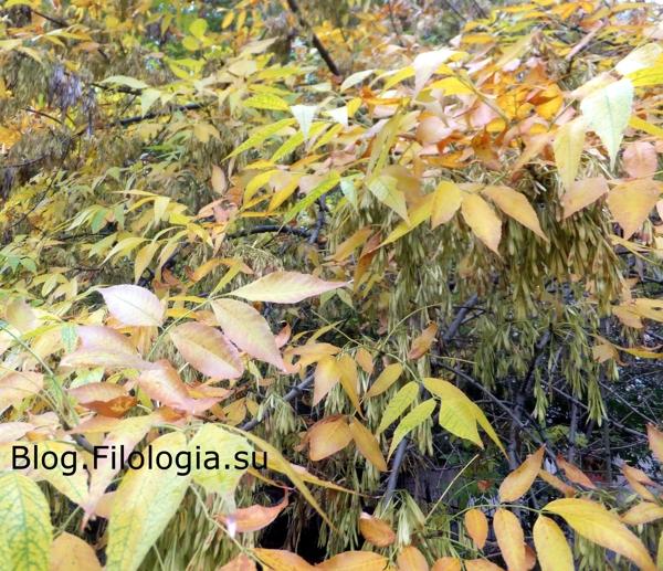 Желтые листья на ветках/3241858_osen05 (600x517, 303Kb)