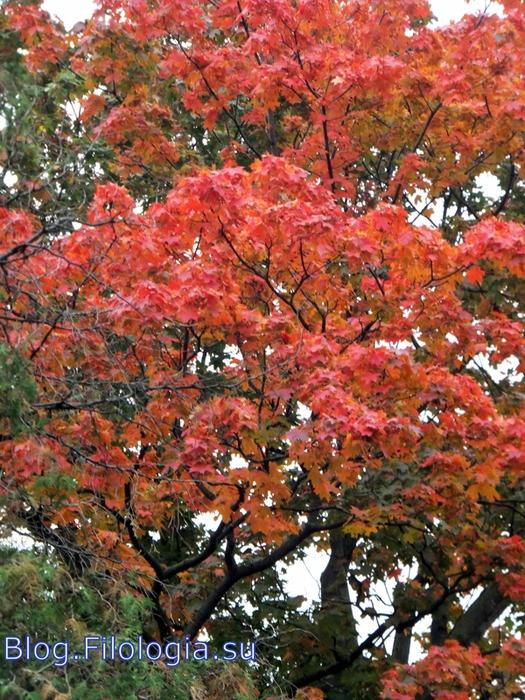 Красные листья на деревьях/3241858_osen07 (525x700, 365Kb)