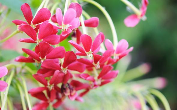 цветы 3 (590x368, 181Kb)