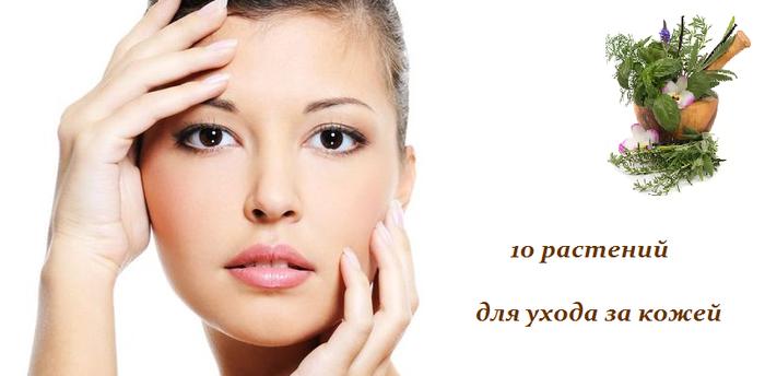1443103414_rasteniya_dlya_kozhi (700x344, 210Kb)