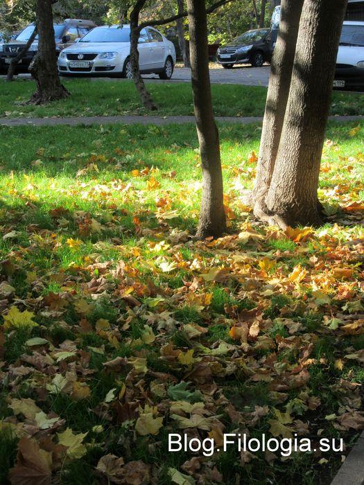 Пожелтевшая листва на лужайке под деревом. (525x700, 104Kb)