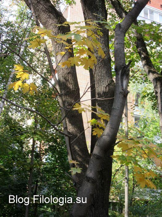 Ствол дерева с пожелтевшими листьями. (525x700, 116Kb)