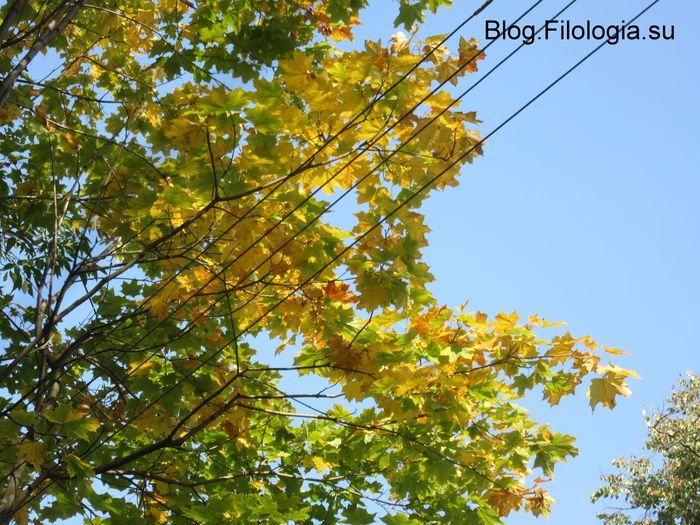 Желтые листья и провода. (700x525, 100Kb)