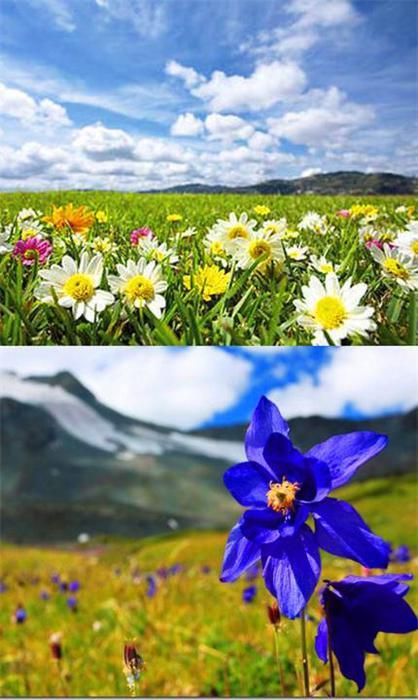 Dolina-cvetov-v-Indii (418x700, 53Kb)