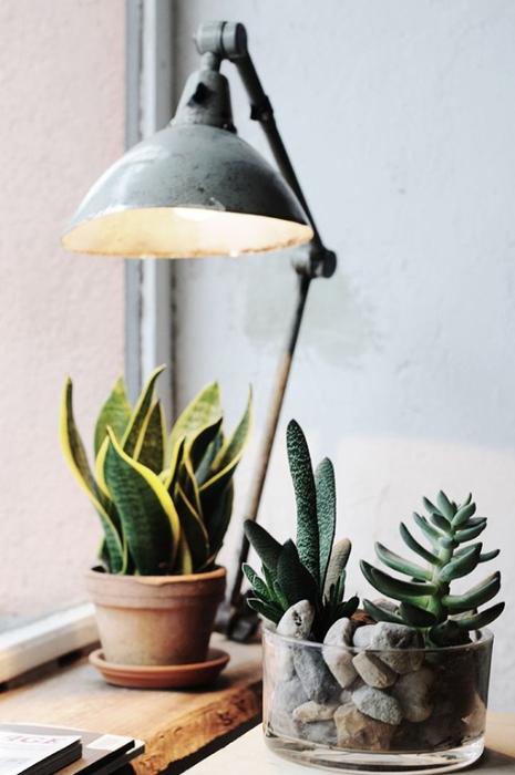 удобрение за комнатными растениями в домашних условиях