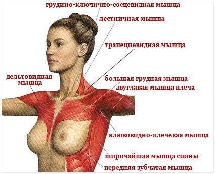 упражнения для красивого бюста (425x344, 133Kb)