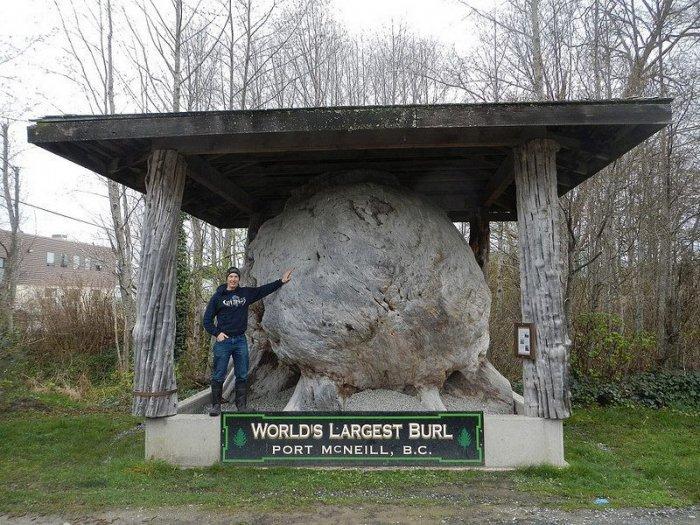 гигантский кап в канаде фото 3 (700x525, 374Kb)