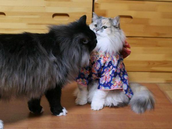 Кошки в кимоно1а (600x451, 135Kb)