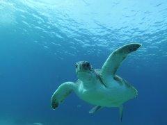 turtle (240x180, 7Kb)