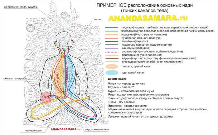 Позвоночник в картинках и фактах. 125303528_nadi