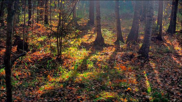 Бабье лето. Утро в лесу/3673959_5 (700x393, 170Kb)