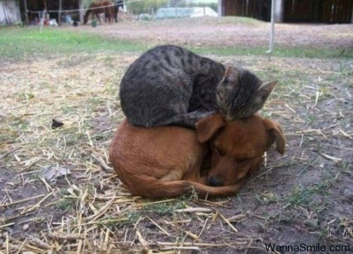 Животные, они все такие разные!