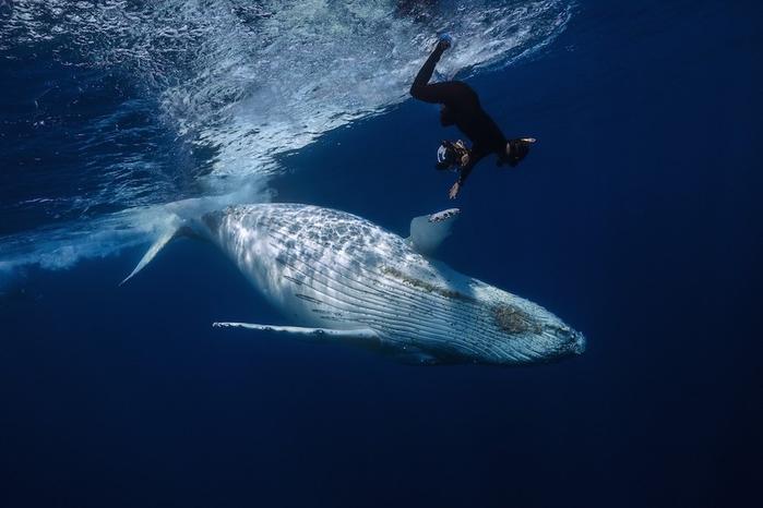 горбатые киты фото Габи Баратью 7 (700x466, 216Kb)