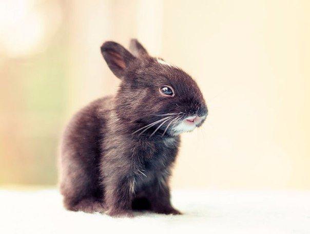 Как растет кролик9 (604x457, 113Kb)
