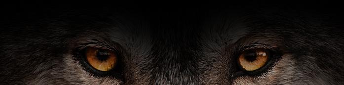 Безымянный (700x172, 166Kb)