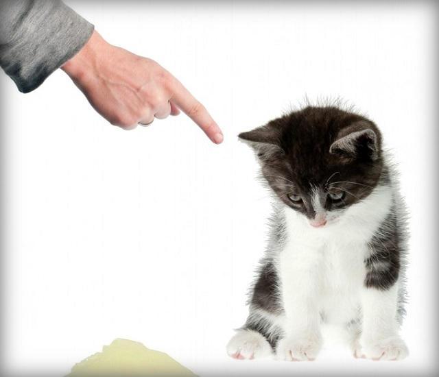 Наказывать кота47 (640x550, 87Kb)