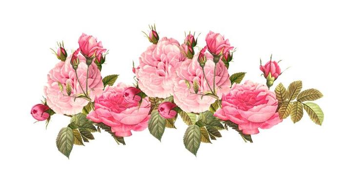PinkRoses11 (700x367, 174Kb)