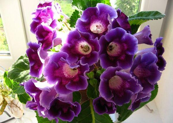 цветы (600x426, 247Kb)