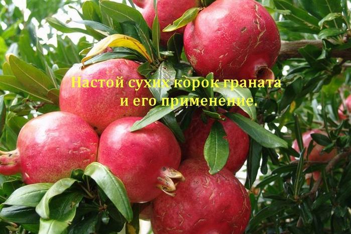 2835299_nastoi_korok_granata (700x466, 280Kb)