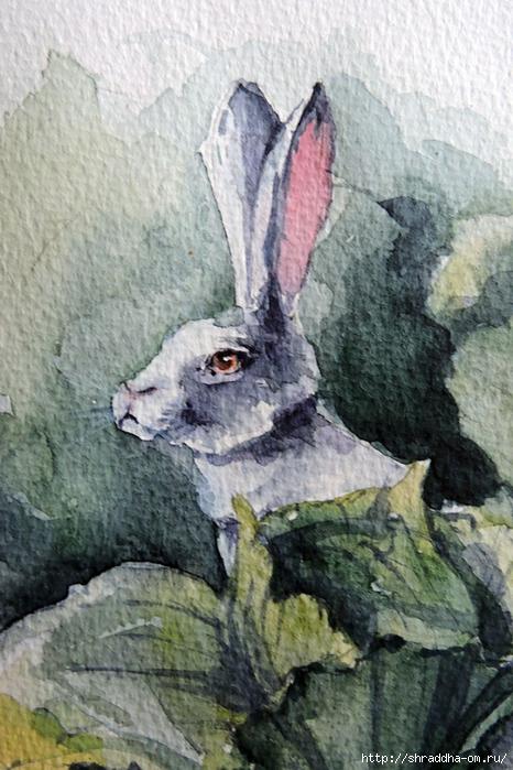 акварель Кролик в капусте от Shraddha 21) (2) (466x700, 295Kb)