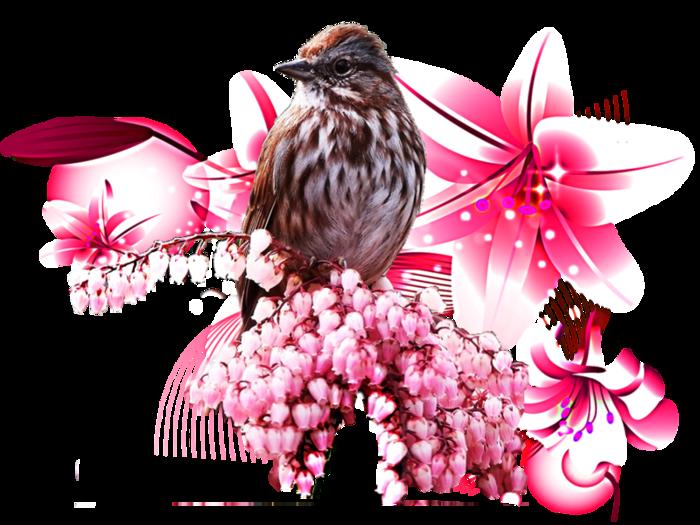 птица1 (700x525, 439Kb)