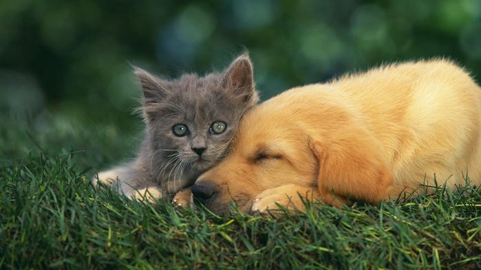 котята и щенки вместе