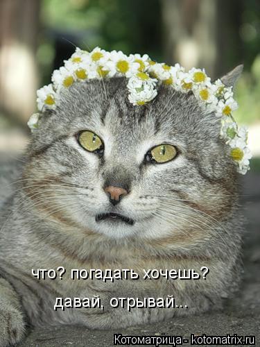 kotomatritsa_9 (375x500, 151Kb)