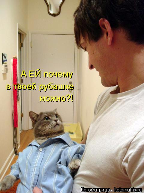kotomatritsa_- (480x640, 225Kb)