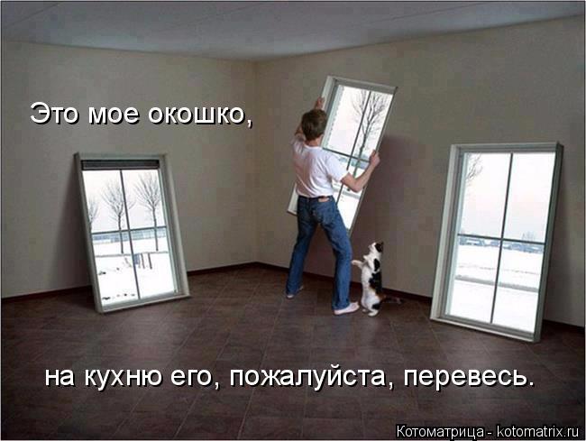 kotomatritsa__ (650x489, 186Kb)