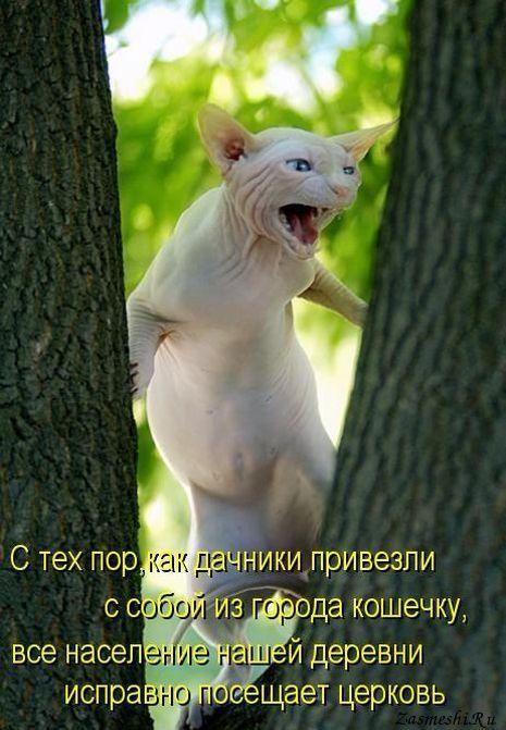 5680197_117Novayakoshkavderevne (465x671, 61Kb)