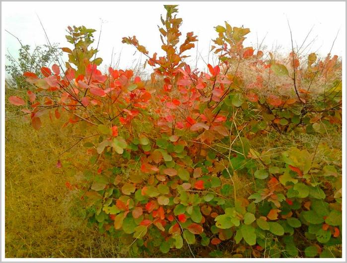 Багряный октябрь в херсонской степи (700x529, 482Kb)