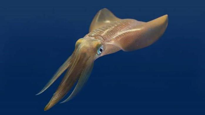 Ученые создали пластик, повторяющий способности кальмара отращивать зубы