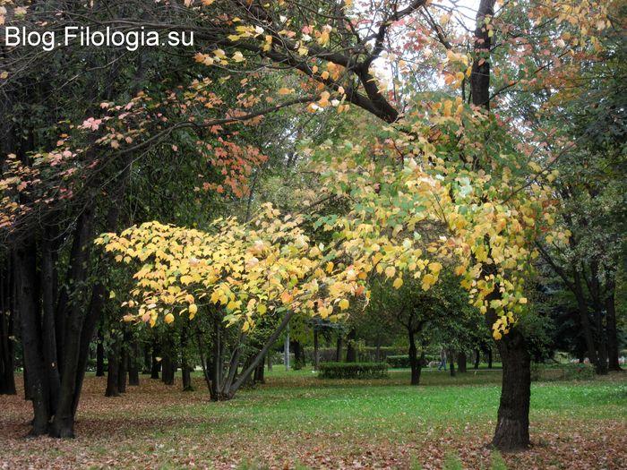 Деревья с пожелтевшими листьями в парке (700x525, 117Kb)
