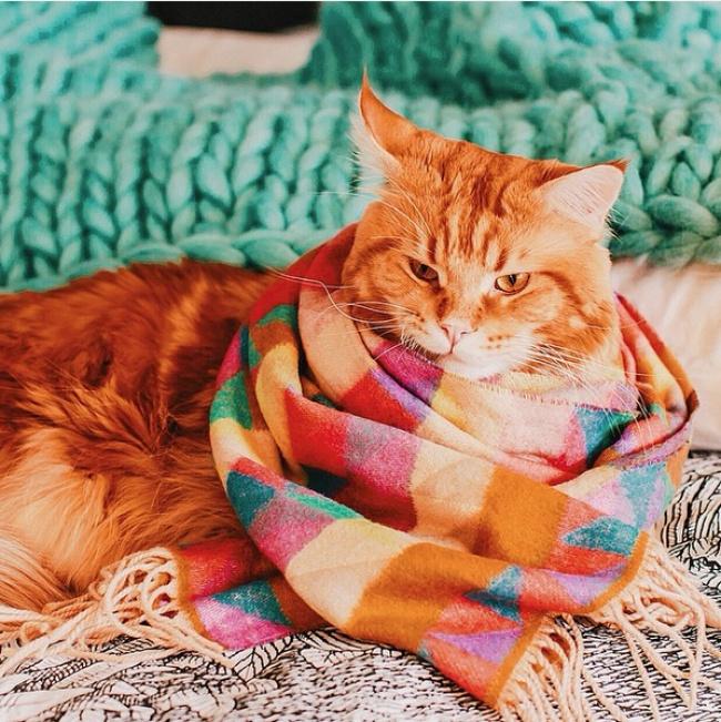 рыжий кот фото 1 (650x651, 198Kb)