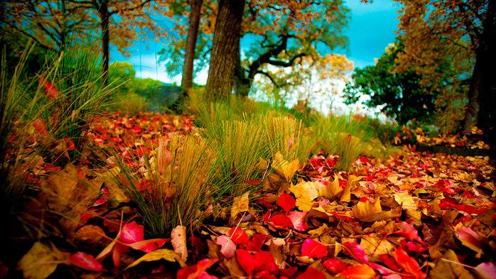 5145824_1443417177_autumncolors3 (700x393, 251Kb)