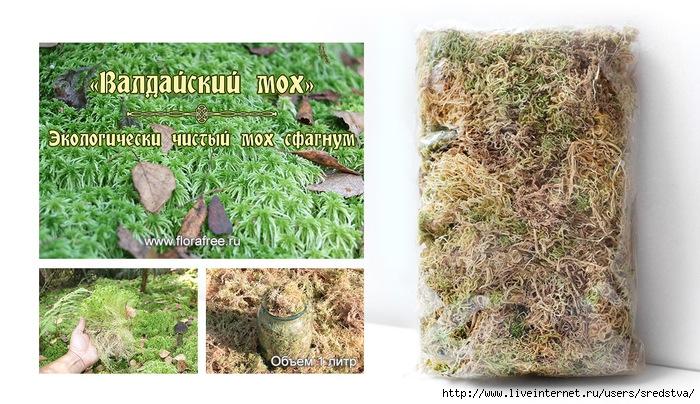 мох сфагнум, мох для декорирования, купить мох, валдайский мох, florafree, мох для цветов, чем укрыть   расения на зиму, сфагнум, ягель, для орхидеи, заготовка мха, где растет мох сфагнум, сфагнум купить,   утеплитель для сруба, экологичный утеплитель,/3041158_IMG_8672_2 (700x404, 289Kb)