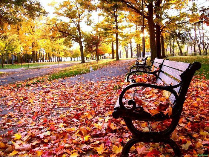 beautiful_autumn3 (700x525, 149Kb)