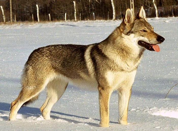 Невероятные помеси зверей: 5 гибридов животного мира