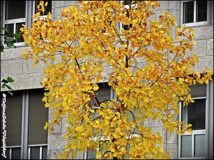 Альбом градоведа - Дюссельдорф в октябре 2015 года - природа