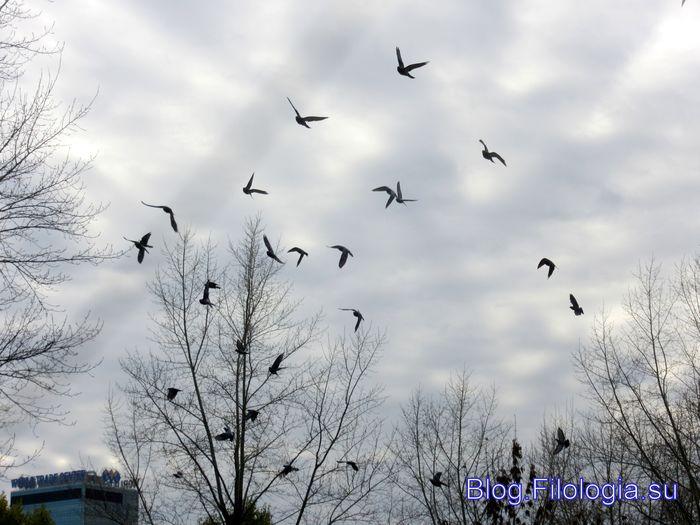 Стая летящих голубей на фоне неба (700x525, 61Kb)