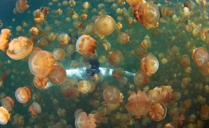 Озеро золотых медуз