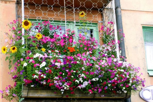 Балкон с цветами сж (631x420, 301Kb)