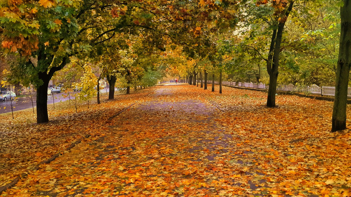 осень (700x393, 508Kb)