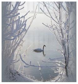 ава_белый-лебедь (250x270, 119Kb)