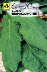 schavel_shirokolistnyi.300x300 (197x300, 99Kb)