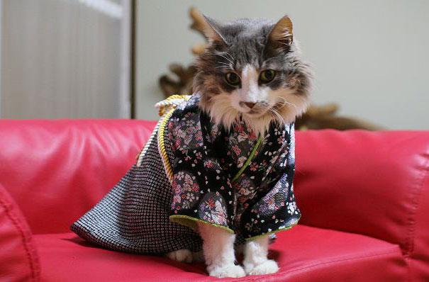 кошки в кимоно фото 1 (605x398, 155Kb)