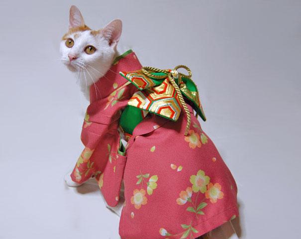 кошки в кимоно фото 3 (605x480, 114Kb)