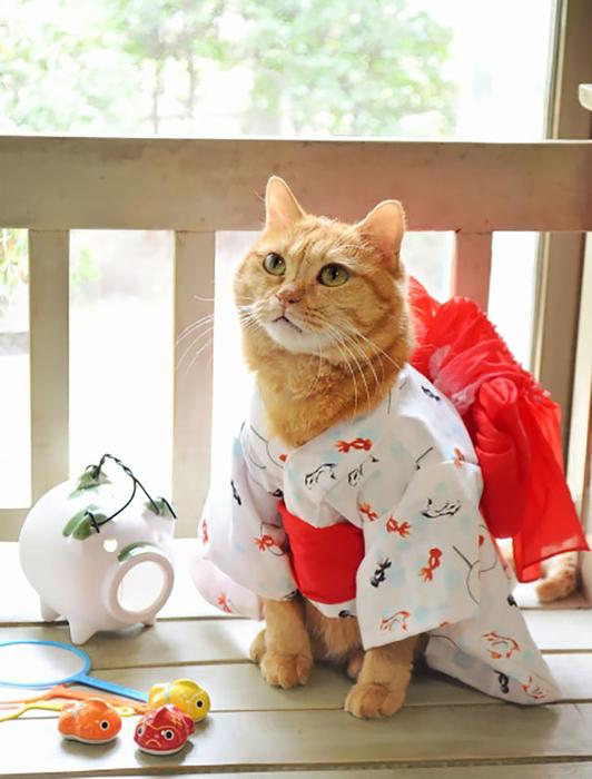 кошки в кимоно фото 5 (532x700, 335Kb)