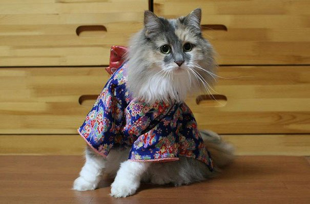 кошки в кимоно фото 7 (605x397, 181Kb)