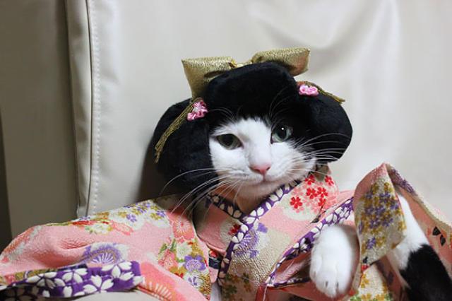 кошки в кимоно фото 9 (640x426, 143Kb)